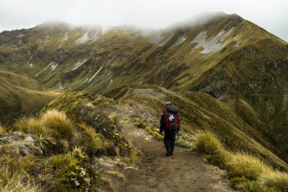 A Great Walker walking along the Kepler Track.