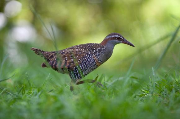 A banded rail.