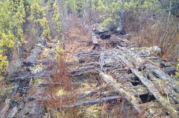 Plank road remains in swampy areas of the Grey Valley track.