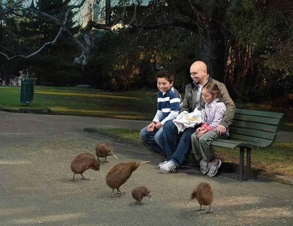 Kiwi in urban park.