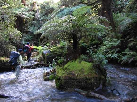 Walkers crossing a stream surrounded by native New Zealand bush. Photo: Stefan Marks/flickr