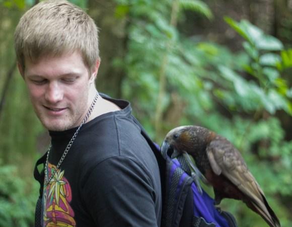 An intern visited by a kaka on Kapiti Island.