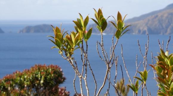View across to Stewart Island. Photo: Abbey McMillan.