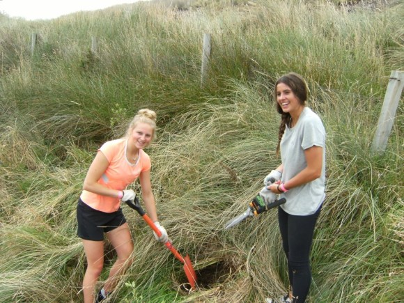 Two volunteers clearing weeds from a penguin burrow.