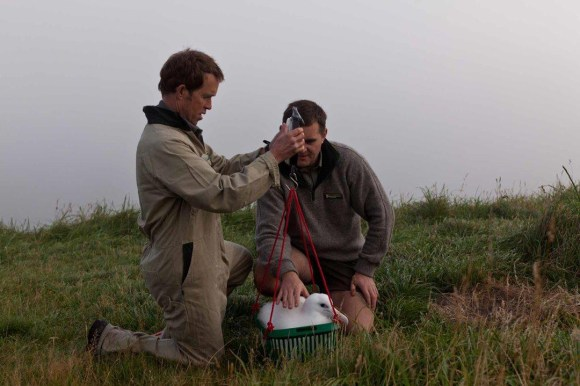 David Agnew weighing an albatross chick at Taiaroa Head.