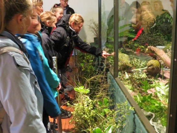 Students observing two kākāpō chicks through the glass.