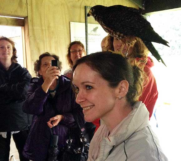Arna Litchfield with a New Zealand falcon / kārearea perched on her head.