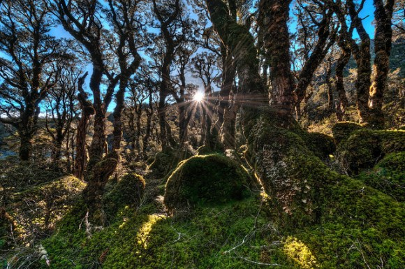 4-enchanted-forest-routeburn-strother