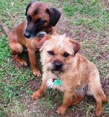 Jak's puppies Pai and Piri.