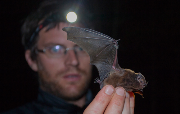 Will Batson with long-tailed bat. Photo copyright Sabine Bernert.