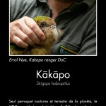 Kākāpō. Photo copyright Sabine Bernert.