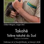 Takahē. Photo copyright Sabine Bernert.