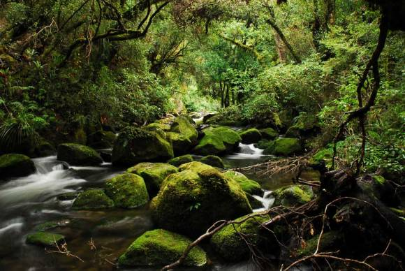 A river in Te Urewera. Photo copyright: Randall Watson | CC BY-NC-SA 2.0.