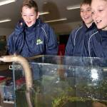 Samuel Williams (12), Hayden Chaplin (11) and Isaac Williams (11) all from Matarau School check out Elvis the eel at the Living Water Hikurangi Open Day at the Jordan Valley Farm on the 17th October, 2014.