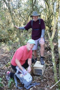 Norm Thornley and Dave Hunt in Karori Park checking a stoat trap.