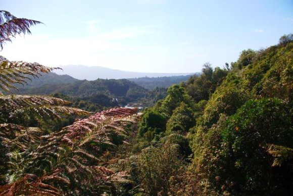 The view over Waimangu Scenic Reserve.