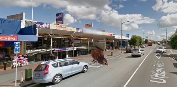 A kiwi in Papakura!