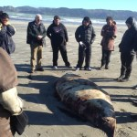 Maori Conservation Foundation Course students with a deceased whale.