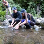 Releasing whio in Tongariro National Park.
