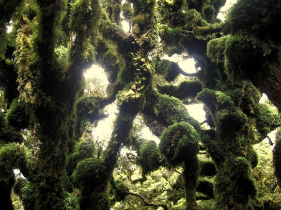 Moss covered trees in Rimutaka Forest Park. Photo: Keith Miller | CC NY-NC-ND 2.0.