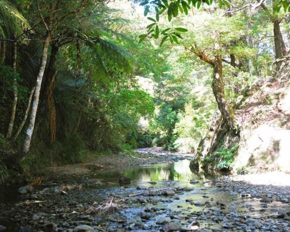 Graces Stream, Rimutaka Forest Park. Photo: Laura Honey | DOC.