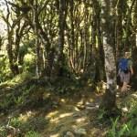 Tramper in Rimutaka Forest Park.