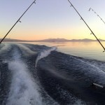 Taupo fishing. Photo: Dino Borelli | CC BY-NC 2.0.