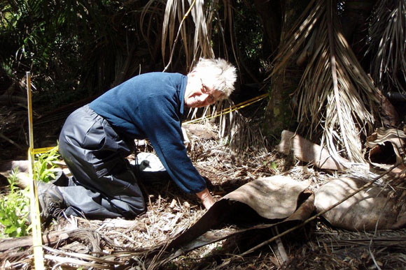 Naomi Stanbridge searching for snails at Kaihoka Scenic Reserve. Photo: DOC.