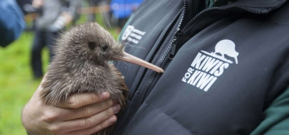 Kiwis for kiwi release on Motutapu Island.