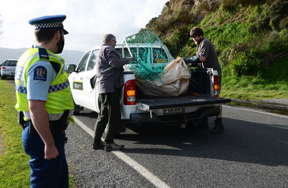Police officer Will Buchanan watches as Pete and Kieran move the seal into the back of the DOC ute. Photo: Don Herron.