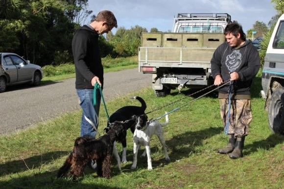 Three dogs awaiting aversion training.