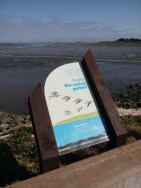 Bar-tailed godwit sign.