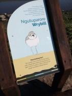Wrybill sign.