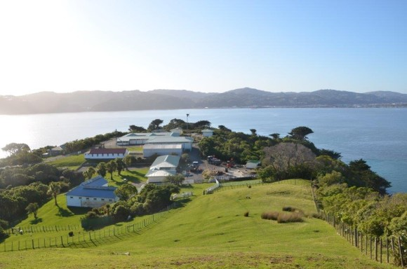 Matiu/Somes Island facilities on a sunny day.