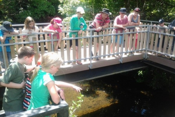 Junior Rangers and visitors feeding the eels at Pukaha Mount Bruce.