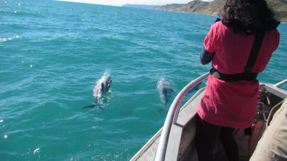 A volunteer takes photos of a small pod of Māui dolphins during the 2015 survey.