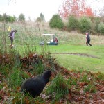 Grant the takahē at Wairakei Golf + Sanctuary.