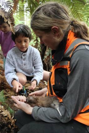 Ranger Jenny Hayward holding a kiwi chick. Photo: Sian Moffitt.