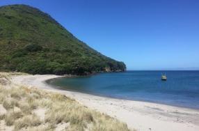 Moutuhora Island
