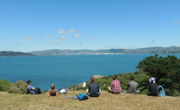Interns looking across to Wellington from Matiu Somes Island.