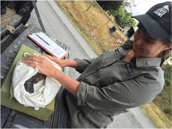Nicola helping to measure the male juvenile platypus we found.