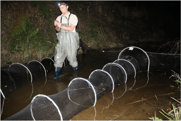 Josh Griffiths of platypusSPOT, with the platypus nets.