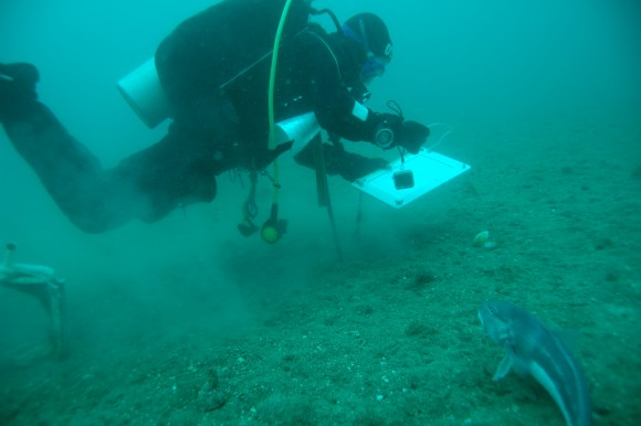 A diver is closely monitored by a watchful blue cod. Photo: DOC