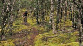 Maitland Track descending through stunted beech forest.