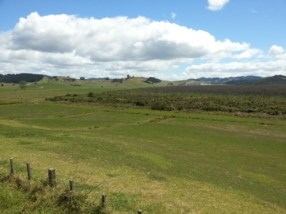 Lowland bogs such as Otakairangi In Northland are mostly rain-fed. Photo: H Robertson/DOC.