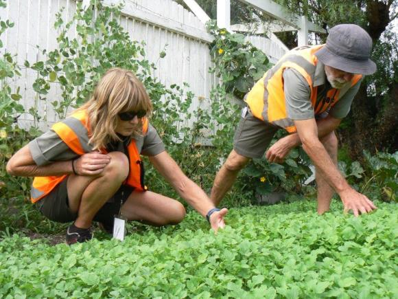Amanda Jennings and Pete Hall search mustard plants. Photo: Jaine Cronin.