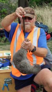 hugh-robertson-kiwi