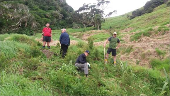 Whangarei-volunteer-day