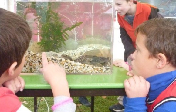 Patrick Lees (NZ Fish Passage Advisory Group member) showing the children some of the ways to find out what fish are in our waterways. Photo: Sjaan Bowie.