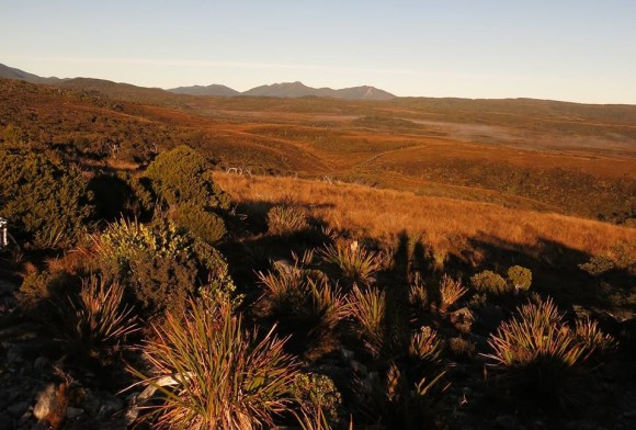 Good morning from Gouland Downs. Photo: Don Herron.